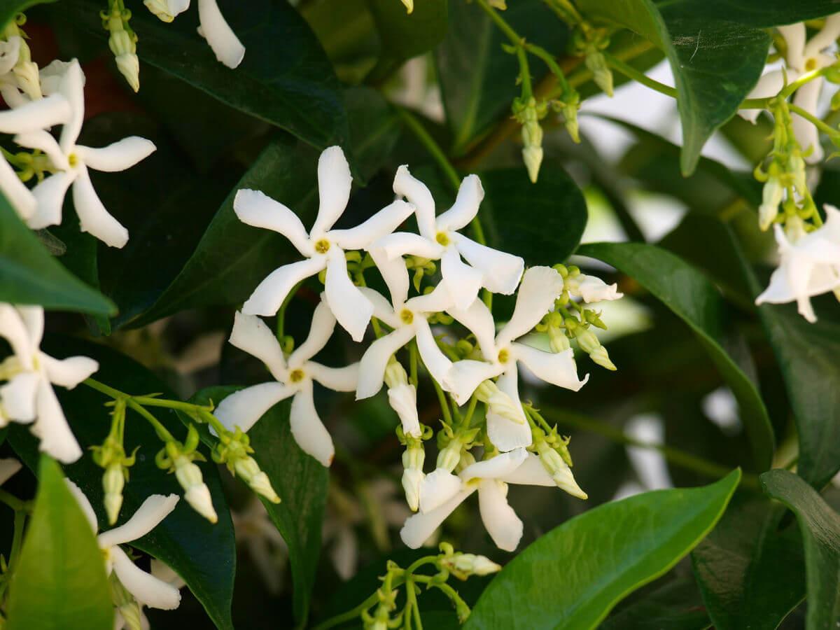 note aromatiche fiori delicati