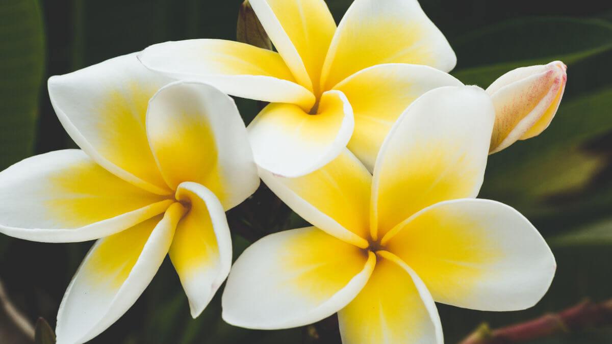 note aromatiche fiori forti